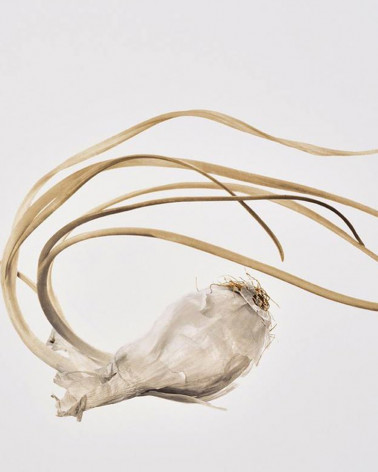 Denis Brihat garlic