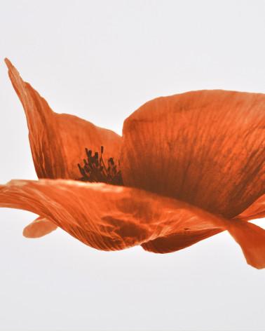 Denis Brihat - Photo Poppy