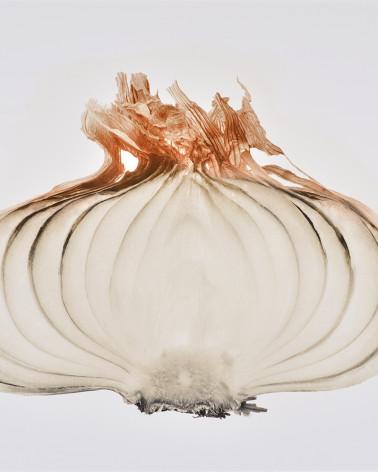 Denis Brihat - Photo Cut Oignon
