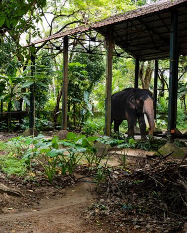 Jean-Luc Moreau Deleris - Cornac and elephant