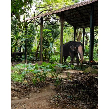Jean-Luc Moreau Deleris - Un cornac et son éléphant