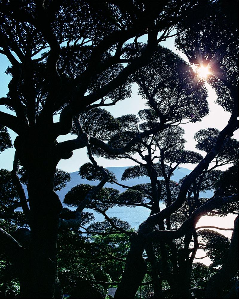 Hans Silvester -  Photo Japanese garden