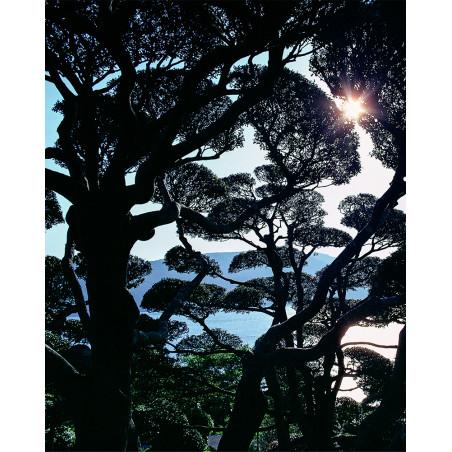 Hans Silvester - Photo Jardin japonais