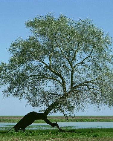 Hans Silvester - Photo arbre mémorable d'Andalousie