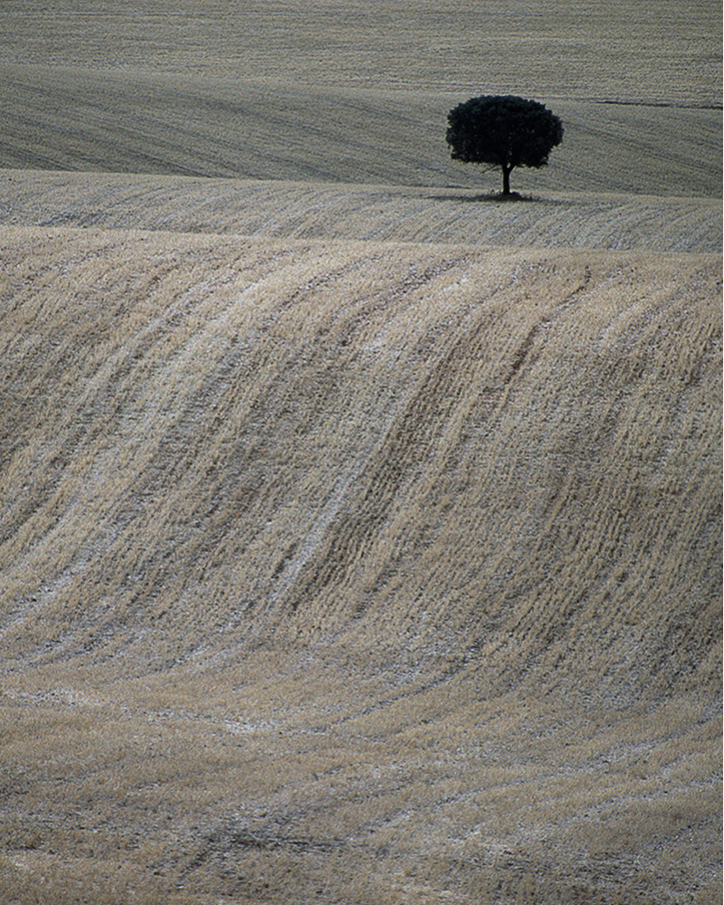 Hans Silvester -  Photo Memorable tree in South of Spain 1