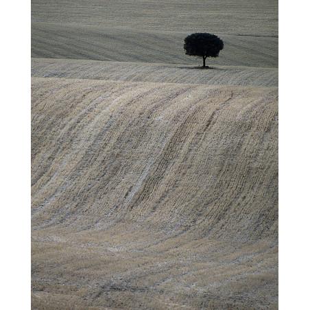 Hans Silvester - Photo Arbre mémorable d'Andalousie 1