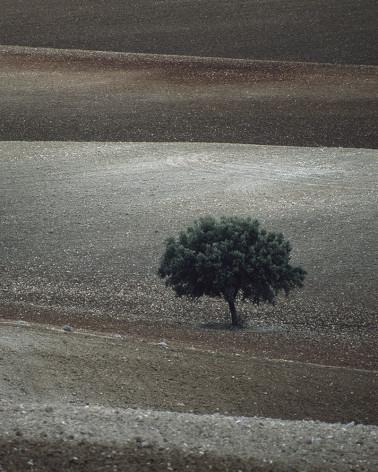 Hans Silvester - Photo arbre mémorable d'Andalousie 2