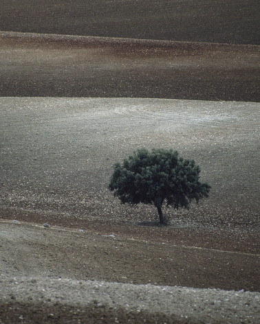 Hans Silvester -  Photo Memorable tree in South of Spain 2