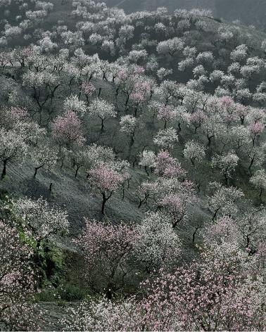 Hans Silvester - Photo arbres mémorables d'Andalousie 3