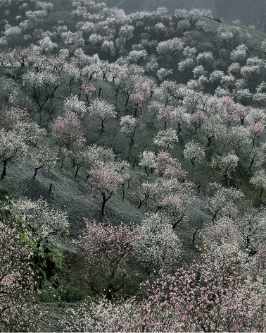 Hans Silvester -  Photo Memorable trees in South of Spain 3