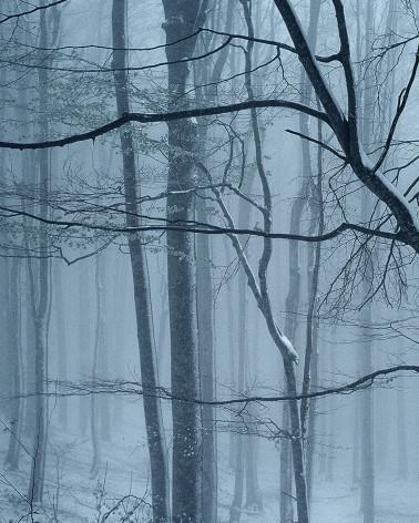 Hans Silvester - Photo Forêt sous la neige