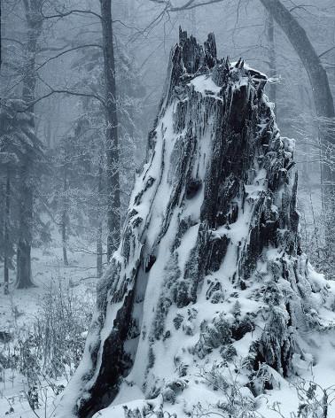 Hans Silvester -  Photo Stump under the snow