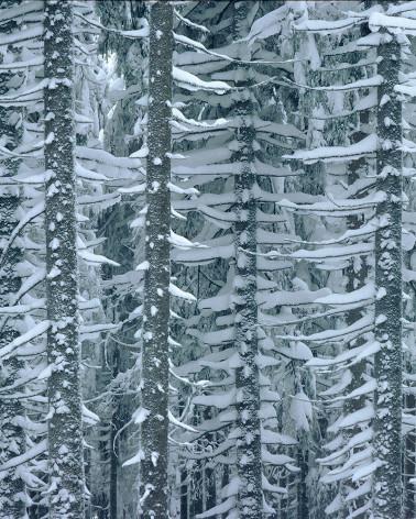 Hans Silvester - Photo Mélèzes sous la neige