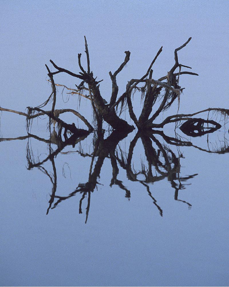 Hans Silvester -  Photo Abandoned tree