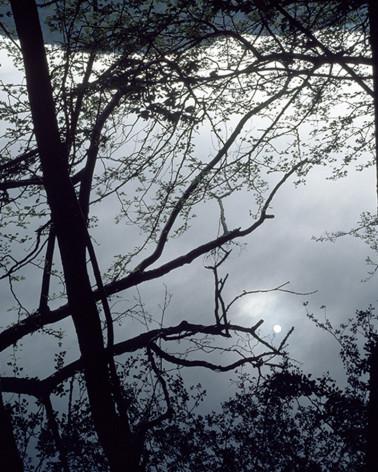 Hans Silvester - Photo Pleine lune sur la forêt