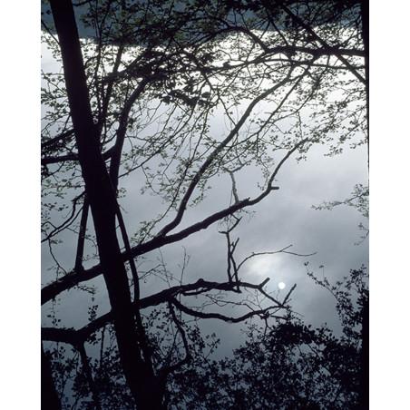 Hans Silvester -  Photo Full moon