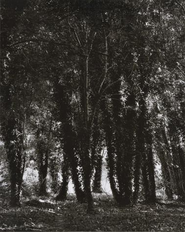 Denis Brihat - Trees and Lichens