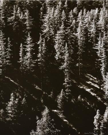 Denis Brihat - Larches in Val Prevert