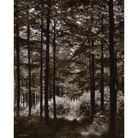 Denis Brihat - Forest