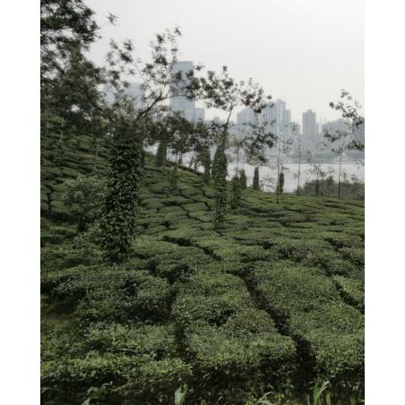 Gilles Desrozier Garden of delights