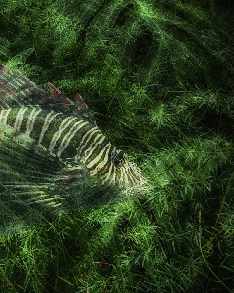 Gilles Desrozier - Garden of Delights