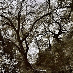 #exposition #jaimelesarbres #denisbrihat #denisbrihatphotography #retourdevoyage #photographie #esprit #foret #arbre #espritdelaforet #art #artiste #galeriedart #lislesurlasorgue #respiration #nature #naturephotography #tirageargentique #signe #numeroté
