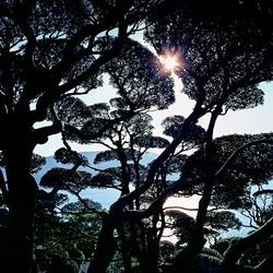#exposition #jaimelesarbres #hanssilvester #retourdevoyage #photographie #esprit #foret #arbre #espritdelaforet #art #artiste #galeriedart #lislesurlasorgue #respiration #nature #naturephotography #japan #japanesesgarden #japanesetree